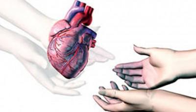 donator organe