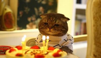 ziua pisicilor