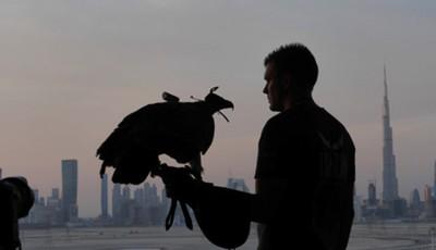 vultur peste Dubai