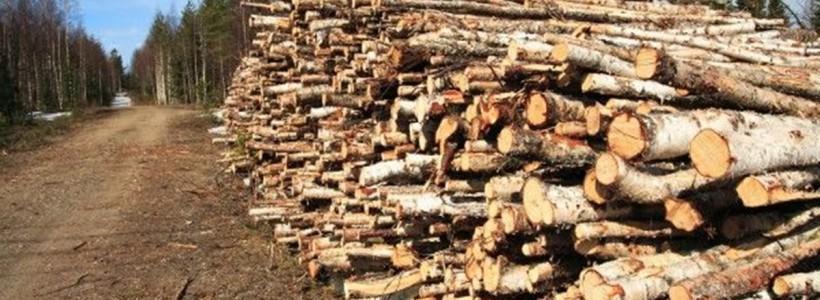 taieri lemne