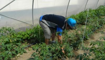 terapie prin horticultura