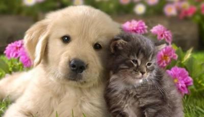 câine pisica 1