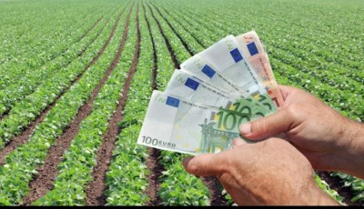 plăţi agricultură