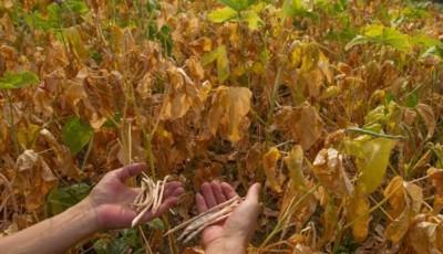 despagubiri agricultura