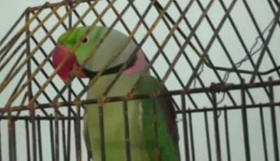papagal arestat