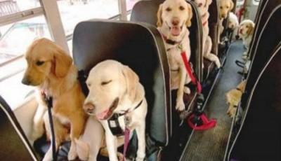 caini in autobuz