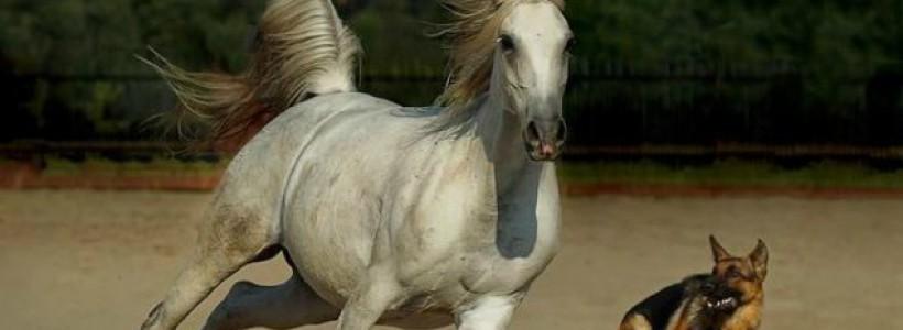 stana izbasa nu mor caii cand vor cainii girlshare
