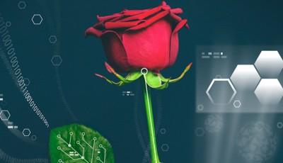 cyborg trandafir