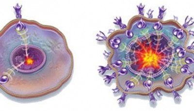celula-normala-si-canceroasa