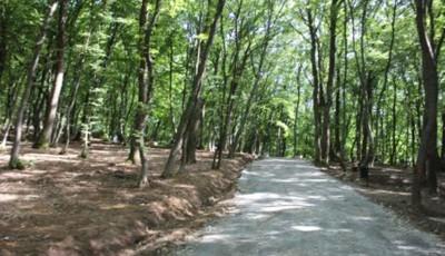Padurea Schullerwald, cros alergare