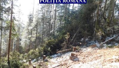 taieri ilegale de arbori