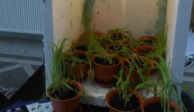 plante, experiment