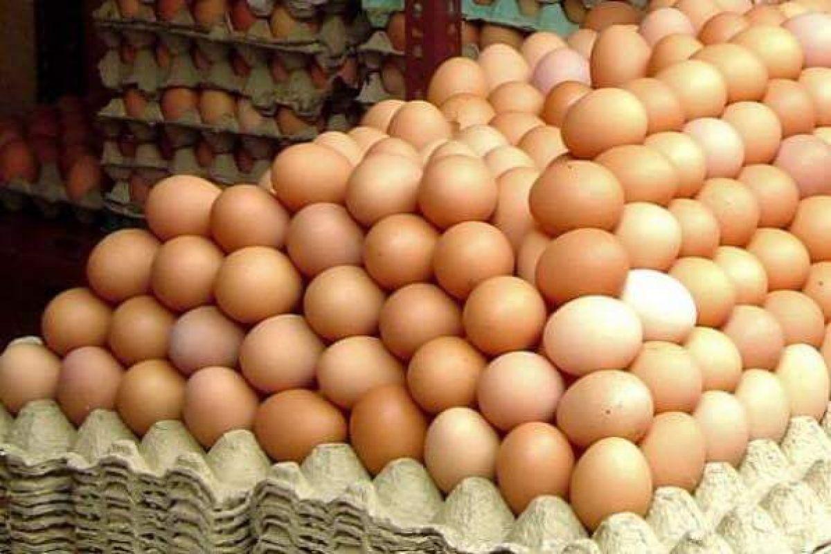 60.000 de ouă infestate cu salmonela, pe piața românească