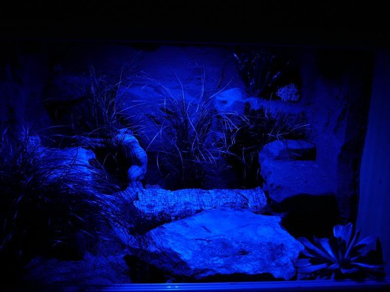 terariu-noaptea-reptile