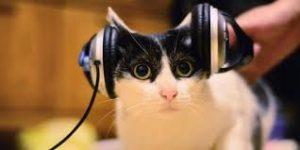 muzica pisica