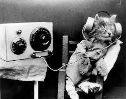 pisica muzica