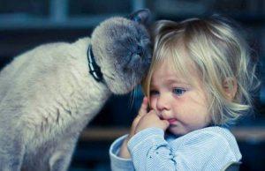 01-cat-child-friendship
