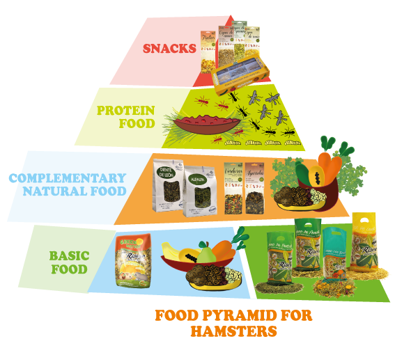 FOOD-PYRAMID-FOR-HAMSTERS1