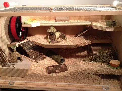 mediul ideal pentru un hamster