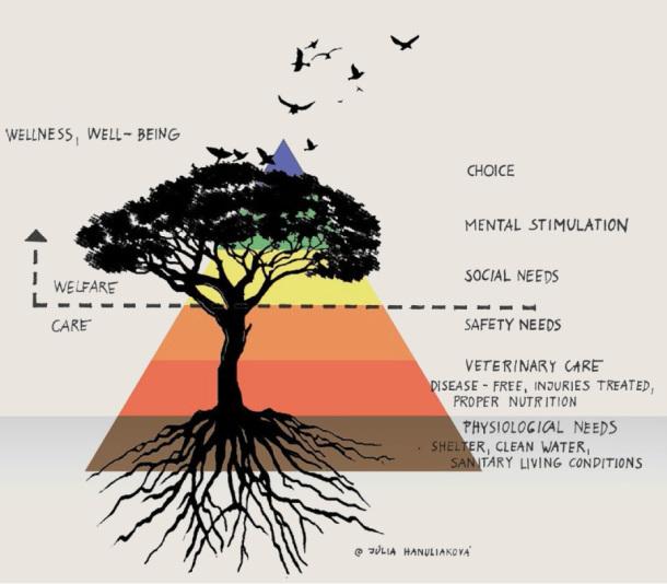 poza 1 - piramida-nevoilor