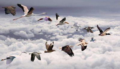 pasari migratoare