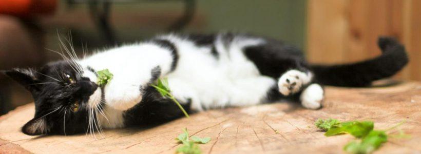 pisici si iarba pisicii photo source pets gallery