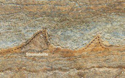 primele fosile pe pamant