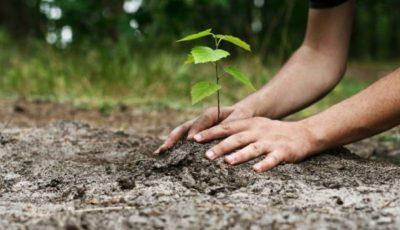 ecologie plantare copac