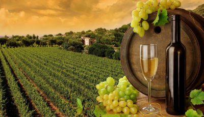 vita de vie sticla vin