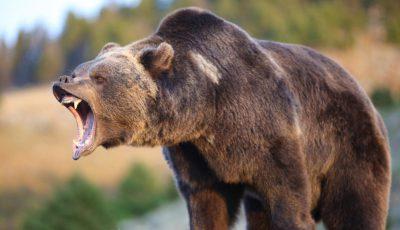 urs atac raget