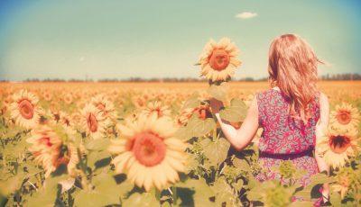 floarea soarelui vara