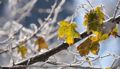 frunze bruma toamna