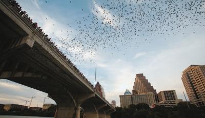 lileci zboara in oras