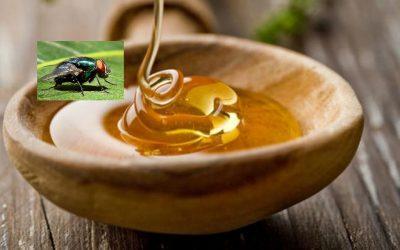 miere şi muscă
