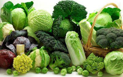 varza broccoli conopida