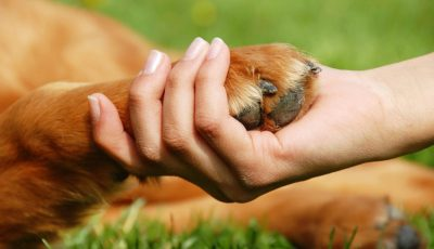 câini vagabonzi