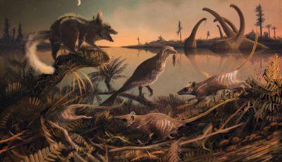 mamifere nocturne