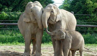 elefanti zoo america